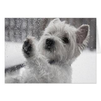 Westie in the Rain Card