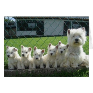 Westie Mother and Puppies Card