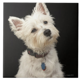Westie (West Highland terrier) with collar Tile