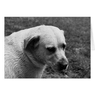 Wet Dog Card