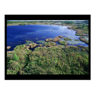 Wetland habitat at Okefenokee National Wildlife Re Postcard