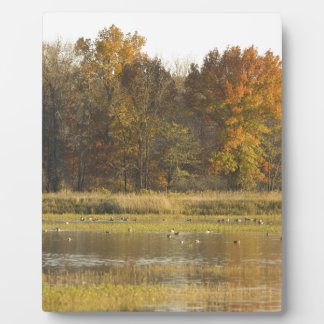 WETLAND WITH AUTUMN TREES IN BACKGROUND AND DUCKS DISPLAY PLAQUE