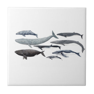 Whales and right whales small square tile