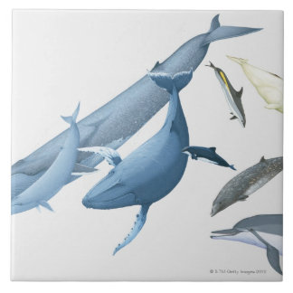Whales Large Square Tile