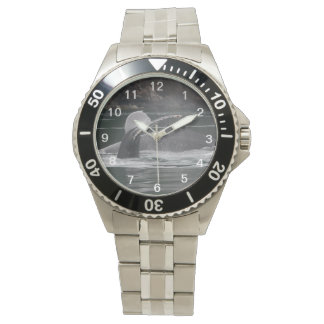 whales watch