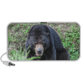 What a Bear! iPod Speakers