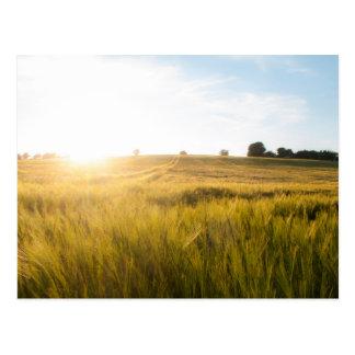 Wheat field sun rise postcard