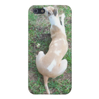 Whippet Dog-Speck iPhone 5 Cases