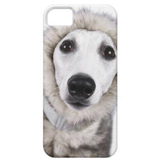 Whippet dog wearing fur coat, studio shot iPhone 5 cases