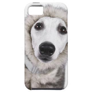 Whippet dog wearing fur coat, studio shot iPhone 5 covers