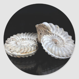 White Ammonites Classic Round Sticker