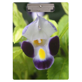 white and purple flower close up clipboard