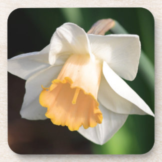 White and Yellow Daffodil Flowers for Floral Lover Coaster