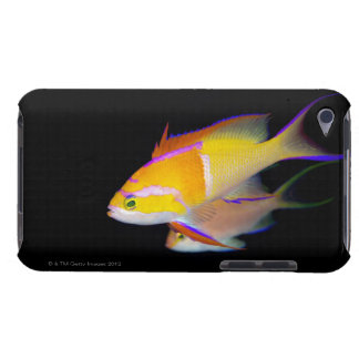White Bar Anthias Barely There iPod Covers