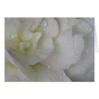 White Begonia Card