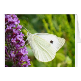White Butterfly 1 Note Card