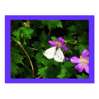 White Butterfly on Purple Flowers Postcard