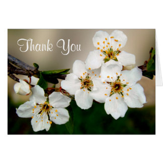 White Cherry Blossom Flowers Thank You Greeting Card
