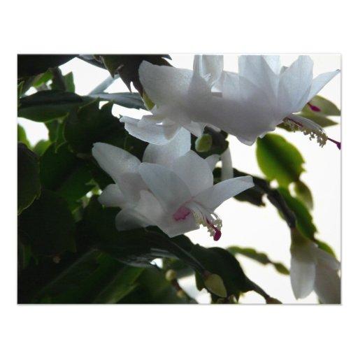 white christmas cactus invitations