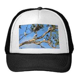 WHITE COCKATOO'S RURAL QUEENSLAND AUSTRALIA CAP