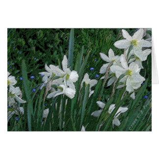 'White Daffodil' Card
