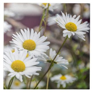 White daisies ceramic photo tile