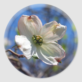 White Dogwood Flower sticker