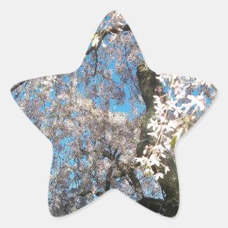 White, Flowering Tree Star Sticker