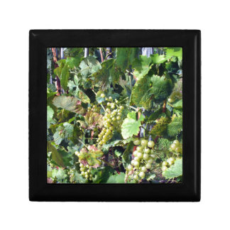 White grapes in a vineyard gift box