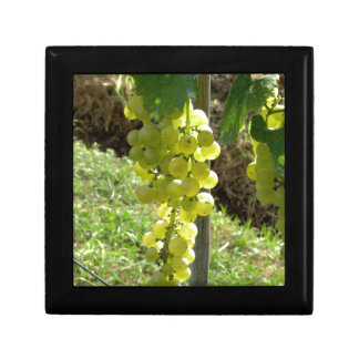 White Grapes on the Vine Gift Box