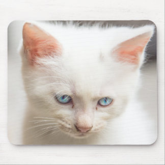 White Kitten Mouse Pad