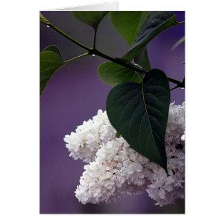 WHITE LILAC CARD