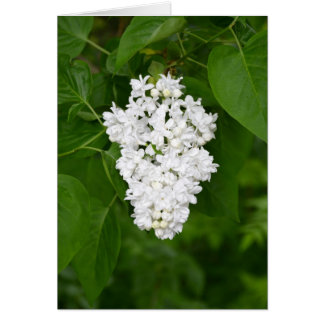 White lilac flower greeting card