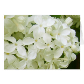 white lilacs cards