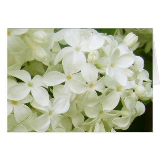 white lilacs card