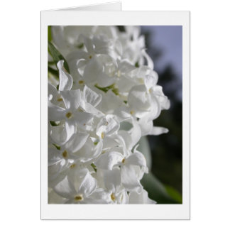 White Lilacs Card
