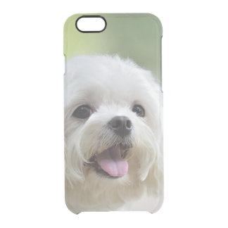 White maltese dog sticking out tongue clear iPhone 6/6S case