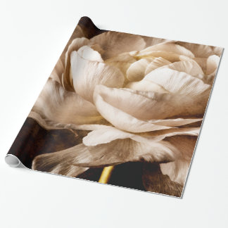 White Ranunculus Flower Sepia Black Background Wrapping Paper