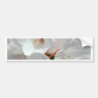 White rhododendron flowers in spring bumper sticker