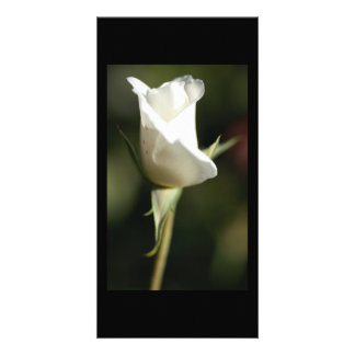 White Rose Bud by Donna Steel Contemporary Artist Card