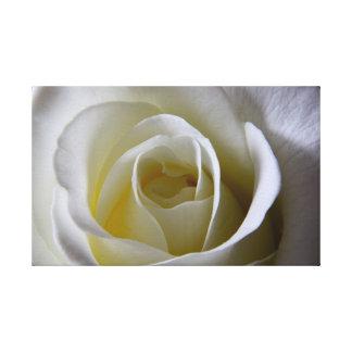 White Rose Canvas Print