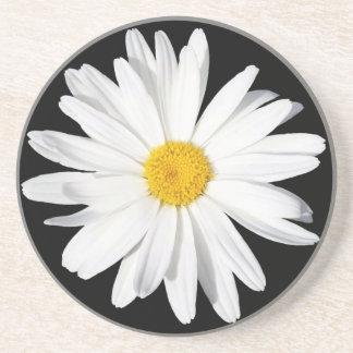 White Shasta Daisy Sandstone Coaster