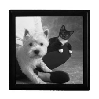 White Terrier and Cat Share the Love Gift Box