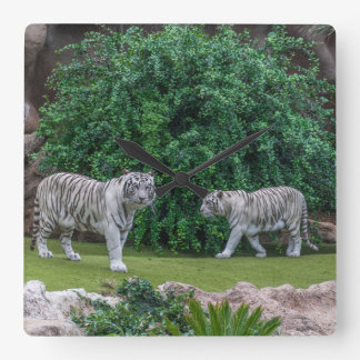 White tigers square wall clock