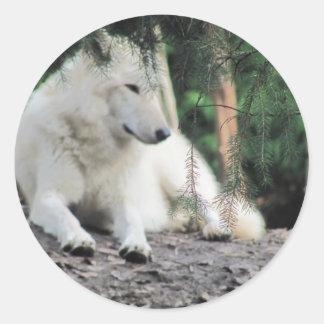 White Wolf Resting Round Sticker