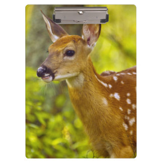 Whitetail deer fawn in Whitefish, Montana, USA Clipboard