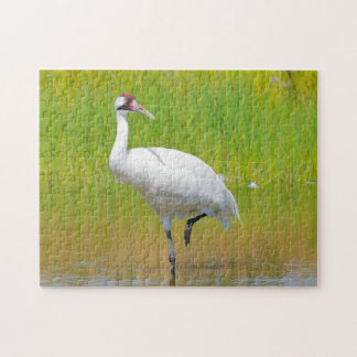 Whooping Crane Wading in Marsh Jigsaw Puzzle
