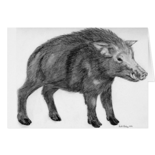 Wild Boar, Defensive Stance Greeting Card