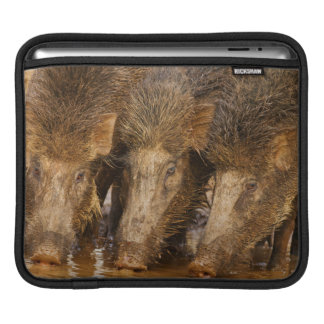 Wild Boars drinking water in the waterhole iPad Sleeve