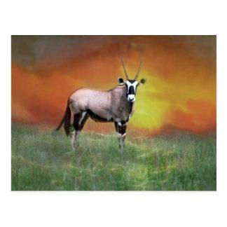 Wild deer at sunset postcard